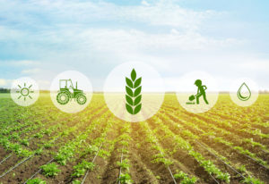 Agritech in Africa: Cultivating Opportunities for ICT in Agriculture